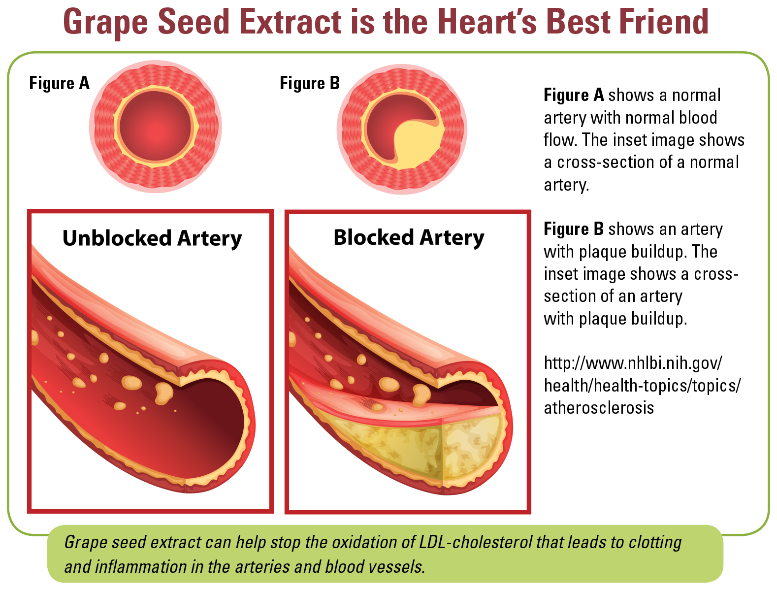 Grape Seed Extract is the Heart's Best Friend
