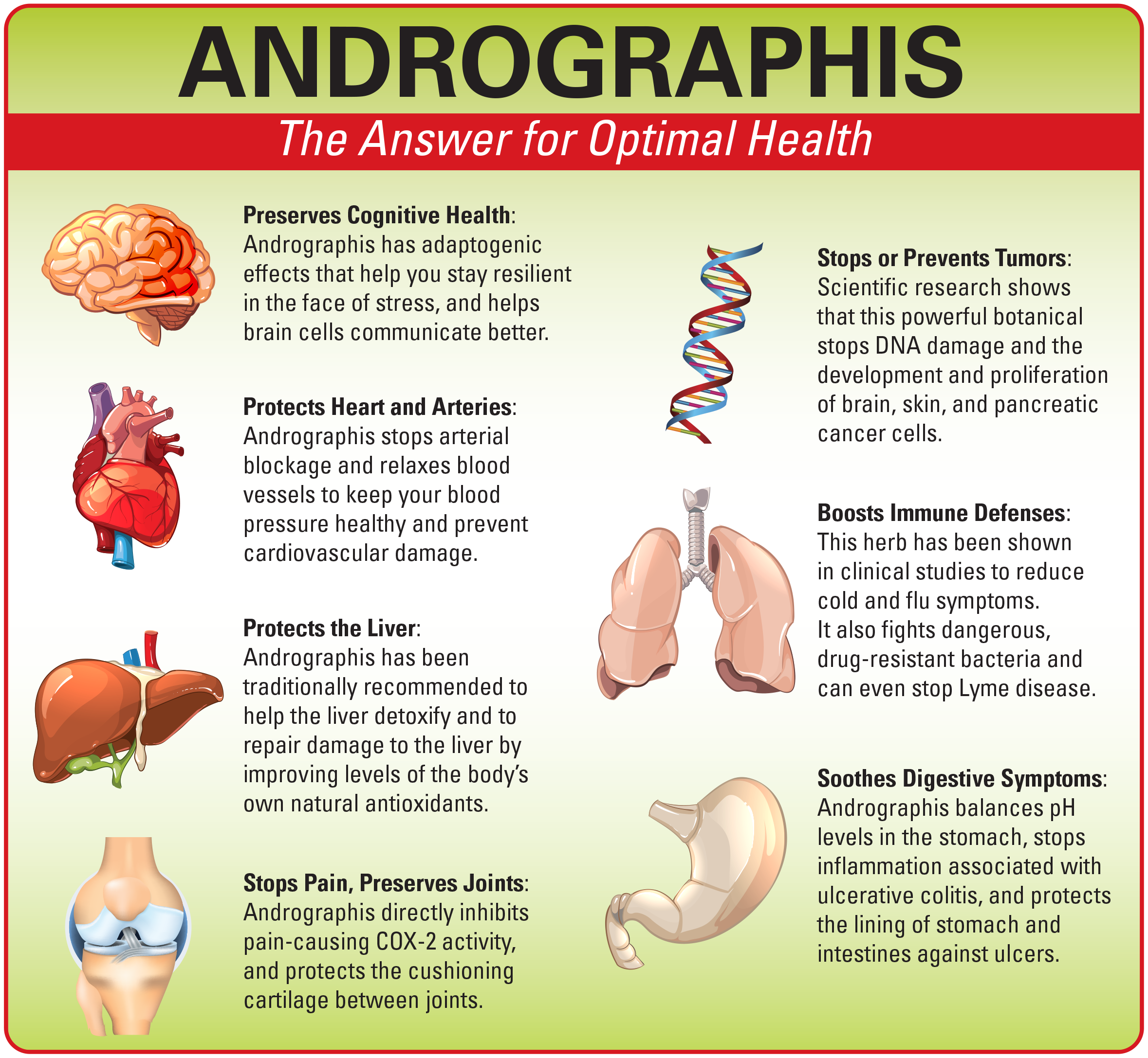 Andrographis – The Answer for Optimal Health